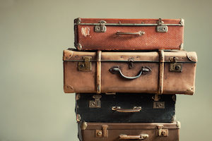 look for pests in suitcases while traveling