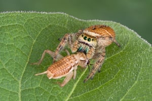 Spiders don't have teeth and can't chew their prey. Instead, they use enzymes to digest their prey before consuming it.
