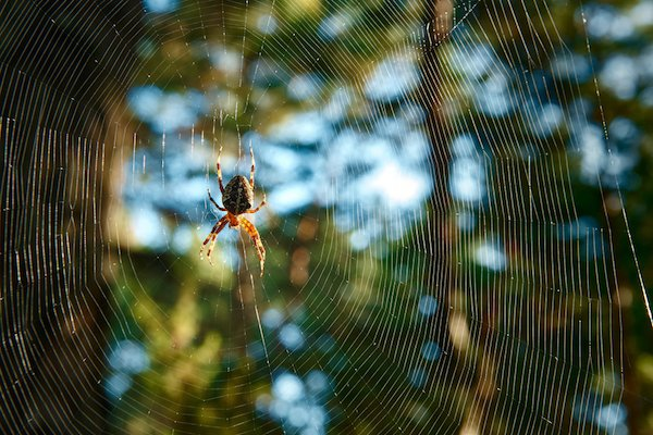 Spider dangling on web in the woods