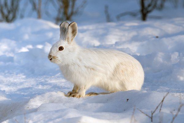 white rabbit standing on snow