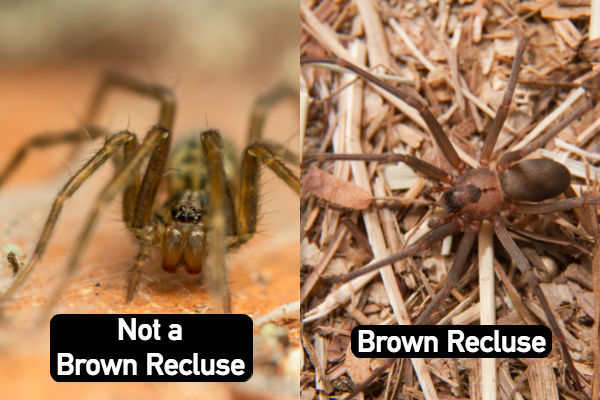 "Most spiders, including common house spiders, have large ""spines"" on their legs"