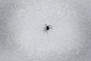 Spiders need shelter to survive the winter