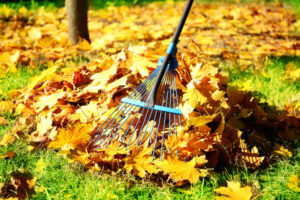 performing regular lawn maintenance will help you prevent fall pests