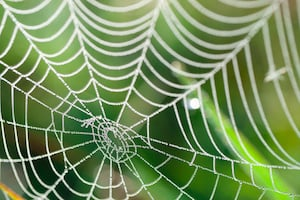 why spider webs are amazing