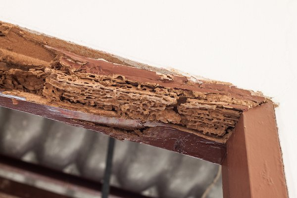 Termite damaged door frame