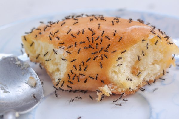 Ants eating donuts