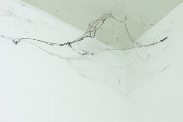 dirty cobweb from pest infestation