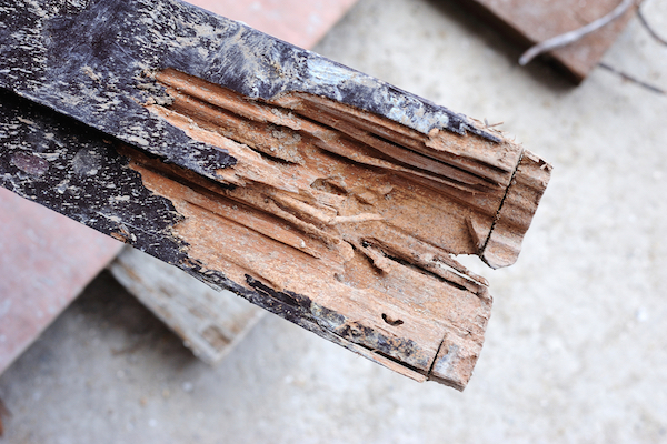 wood damage caused by pest infestation