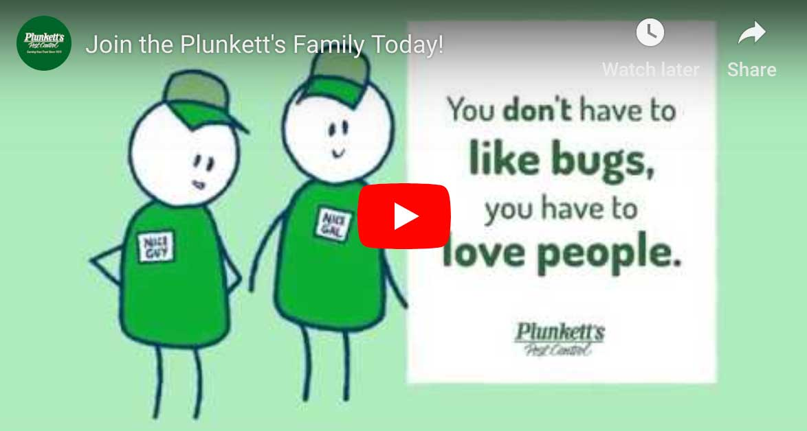 Plunketts Careers Video Player