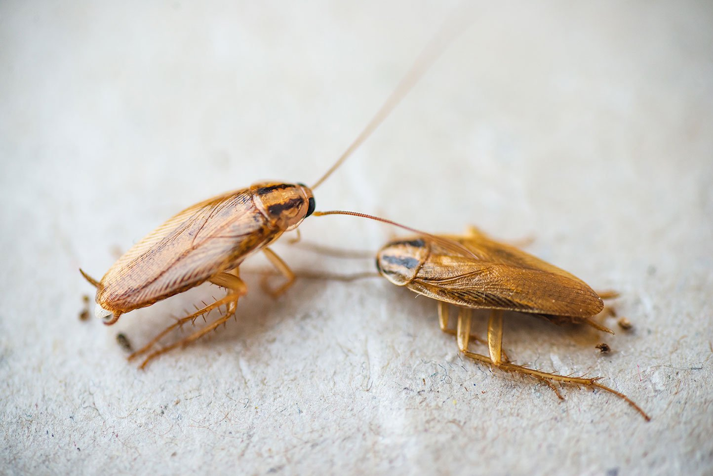 Cockroach Prevent