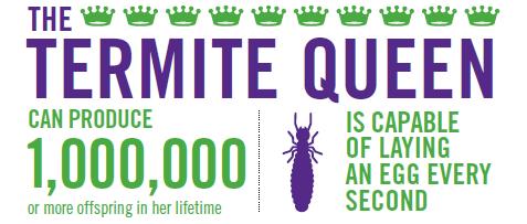How To Get Rid Of Termites Plunkett S Pest Control