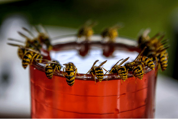 wasps on cup