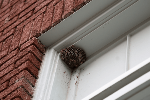 wasps nest in doorway