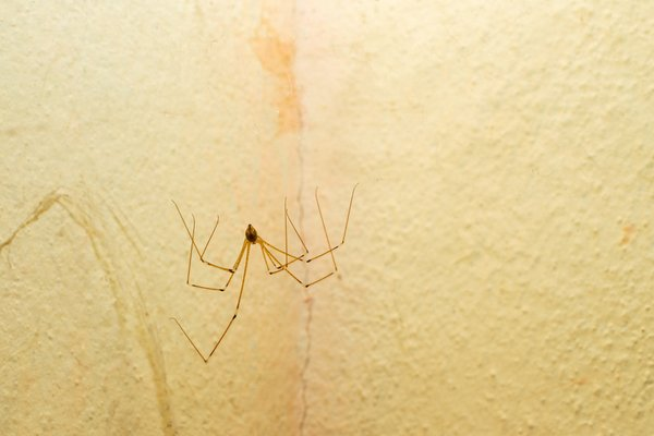 Spider climbing on wall at someone's home
