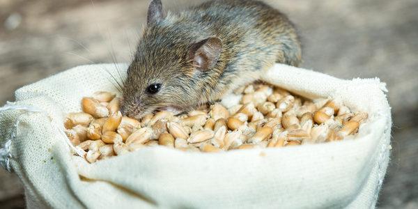 6 Easy Ways To Get Rid Of Box Elder Bugs Plunkett S Pest