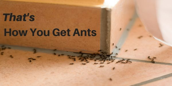 how you get ants