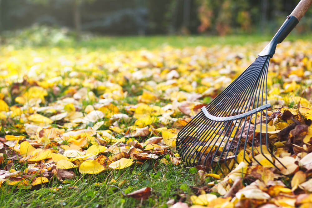 preventing fall pests