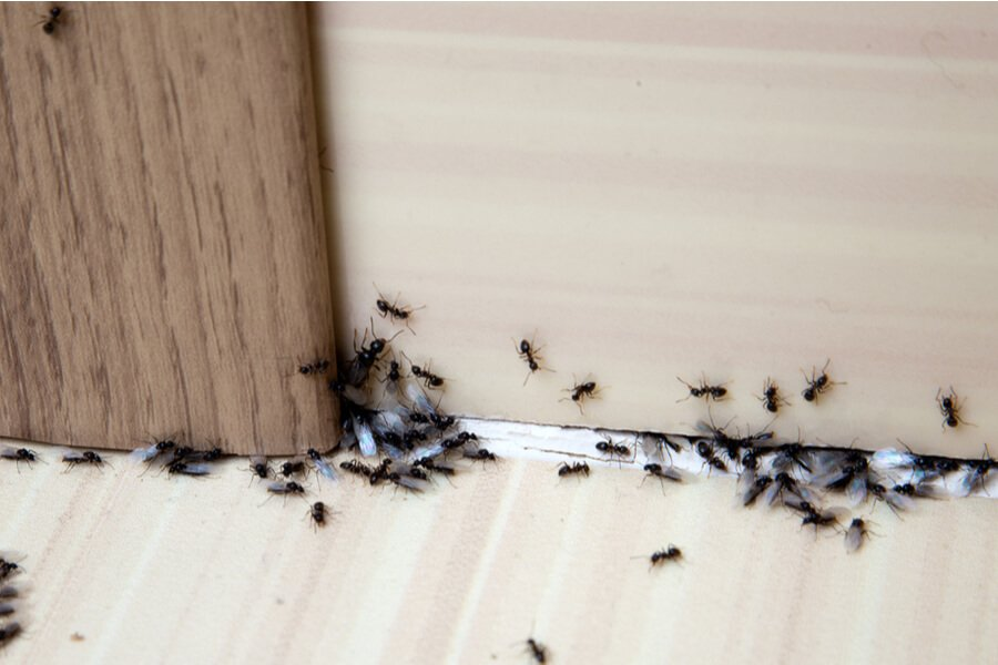 The Hidden Damage of Pest Infestation