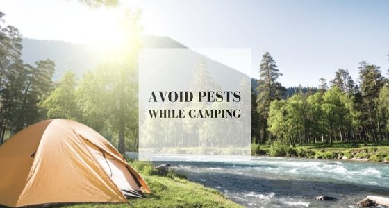 pests while camping