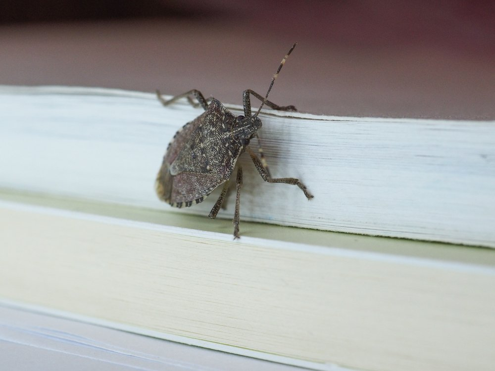 Close up of a stink bug crawling along a windowsill.