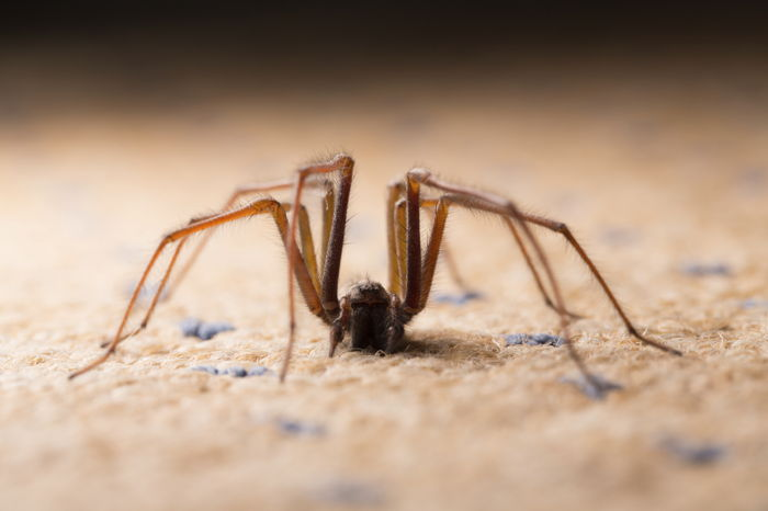 house spider close up