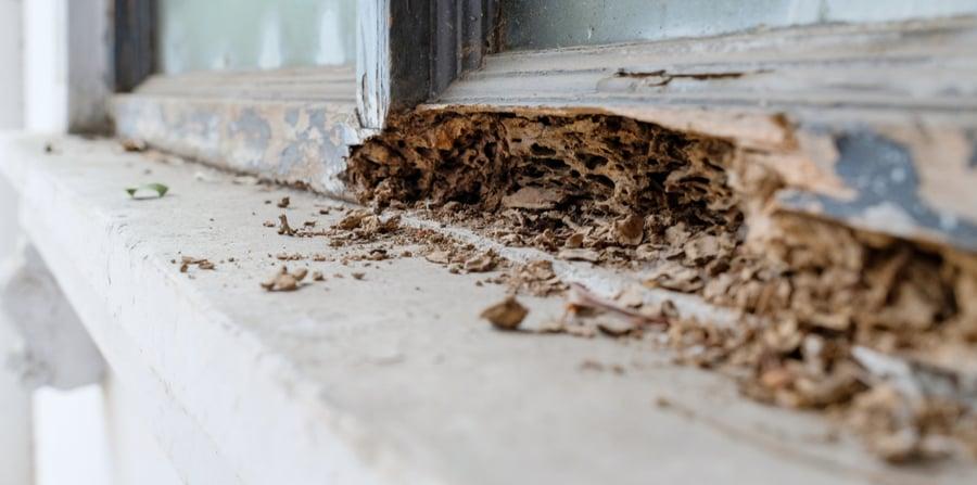 Do I Have Termites Plunkett S Pest Control
