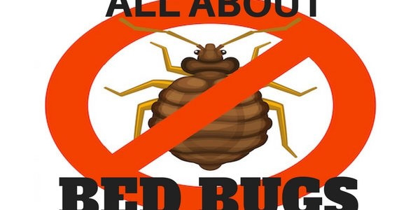 all about bed bugs