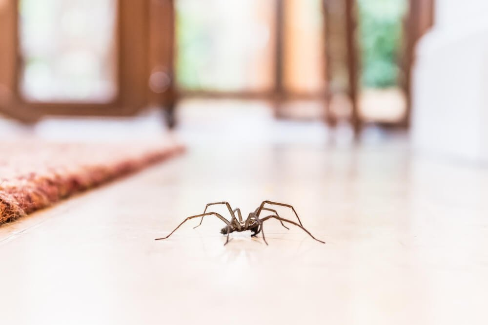 8 of the Weirdest Facts We Know About Spiders