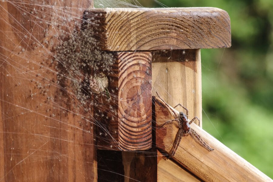 The Ridiculous Biology Behind Spider Webs