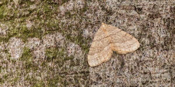 How Did Moths Get In Your House This Winter? - Plunkett's