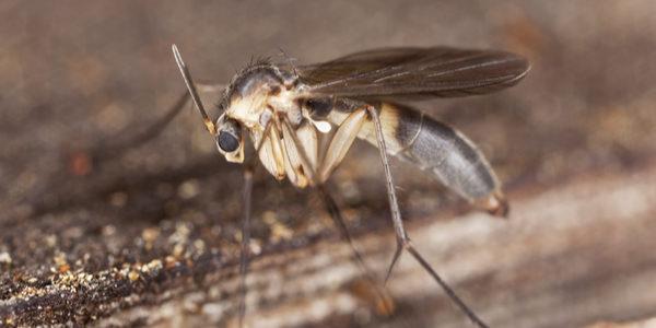 title%% %%page%% - Plunkett's Pest Control